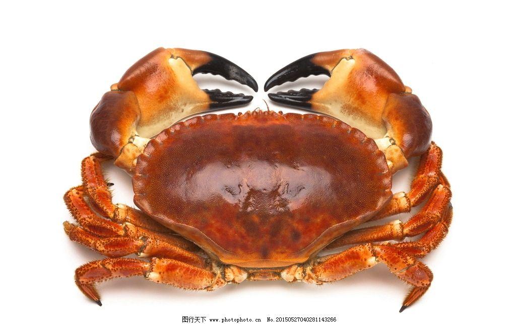 大闸蟹图片素材