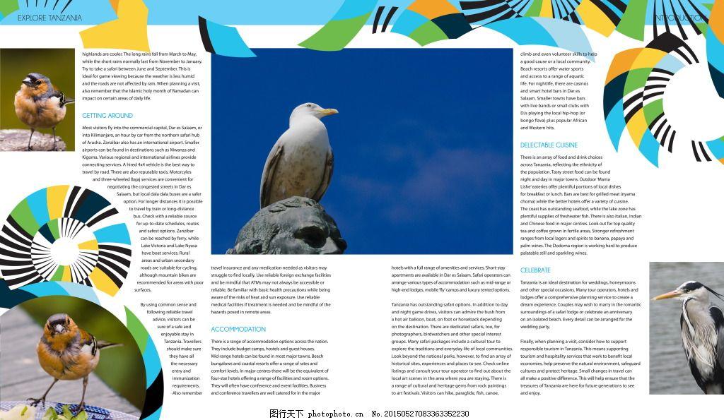 国外动物图册 鸟类动物 保护动物 手册 白色