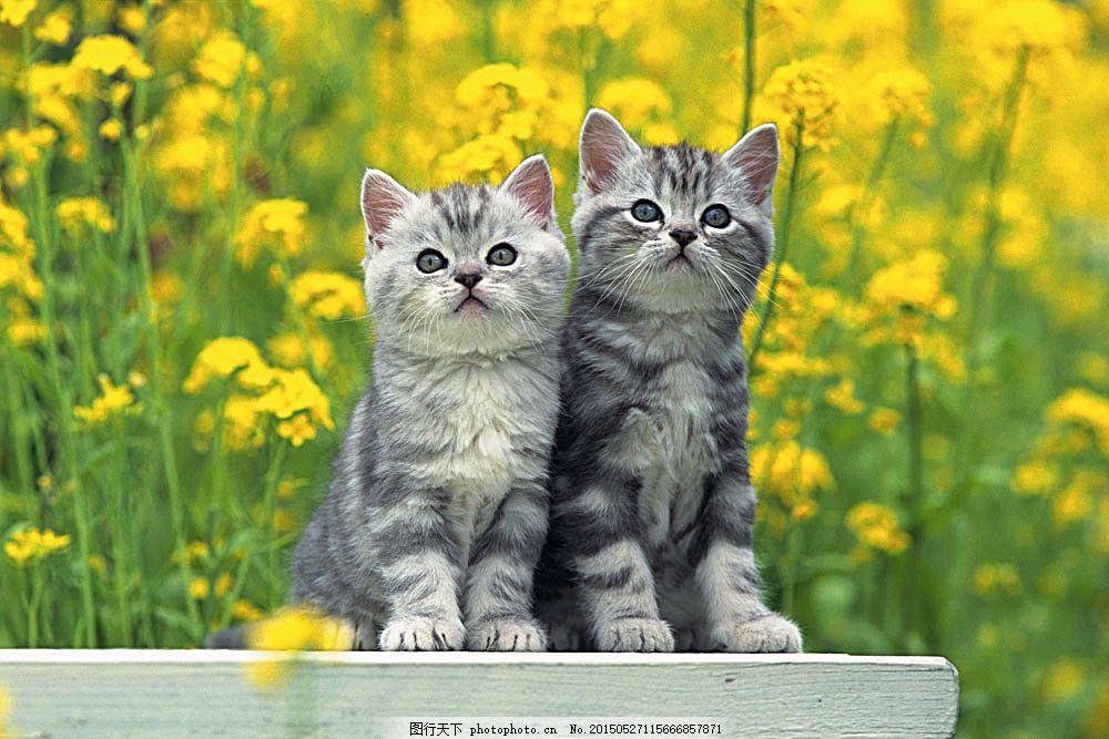 可爱小猫咪 动物世界 小动物 宠物 陆地动物 生物世界 图片素材