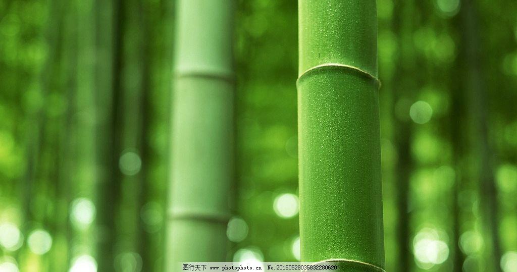 竹子 竹节 竹林 绿色植物 竹子特写 摄影 生物世界 树木树叶 72dpi图片
