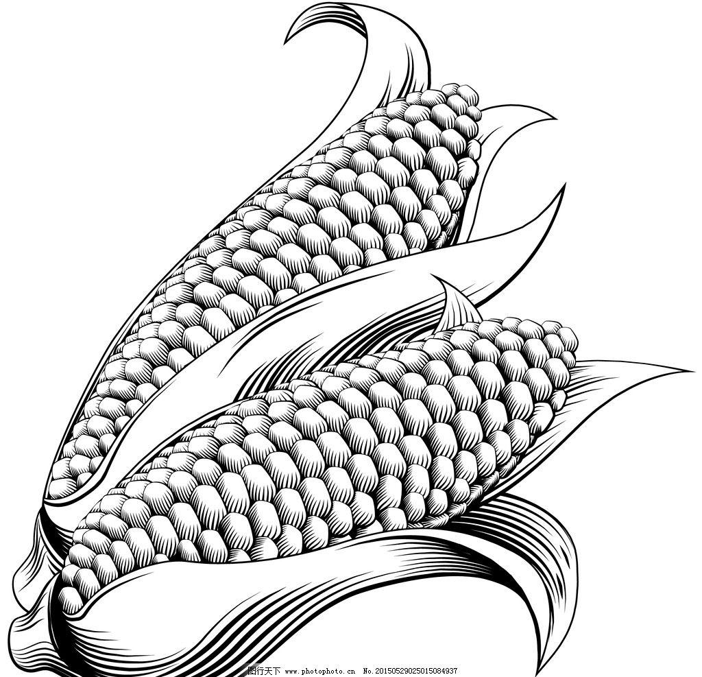 手绘玉米矢量素材图片