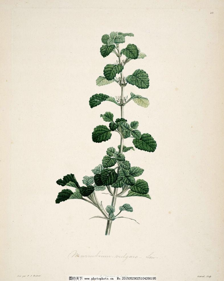 植物园 手绘植物图片,花朵 大图 装饰画 无框画 书籍