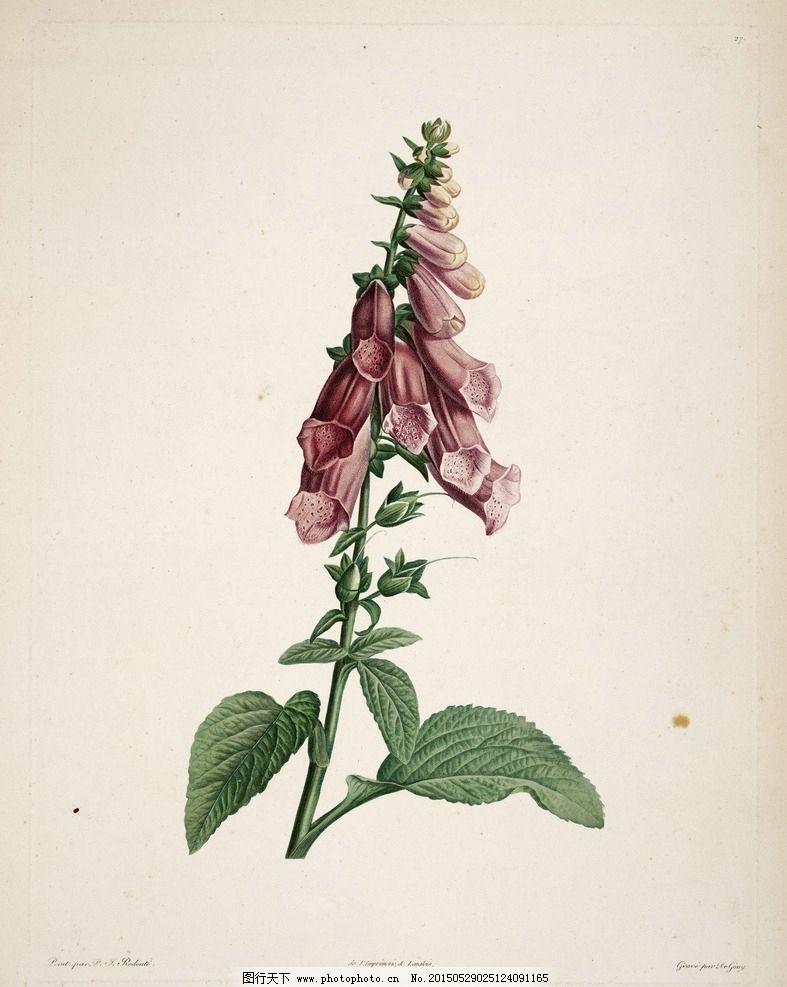 植物园 手绘植物图片