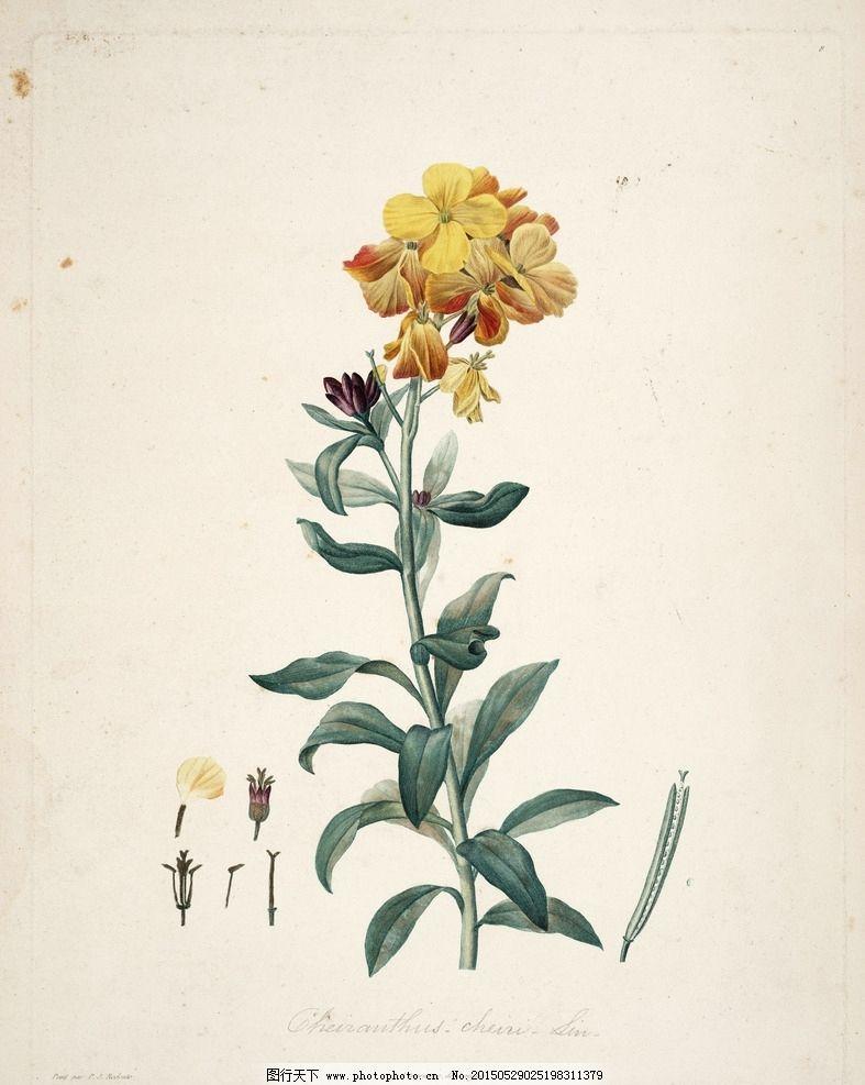 植物园 手绘植物 绘画 插画 兰花 小清新 叶脉 树枝 花朵 大图