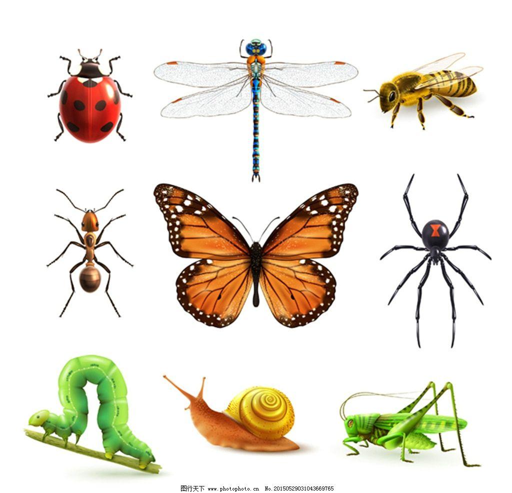 卡通昆虫图标设计图片