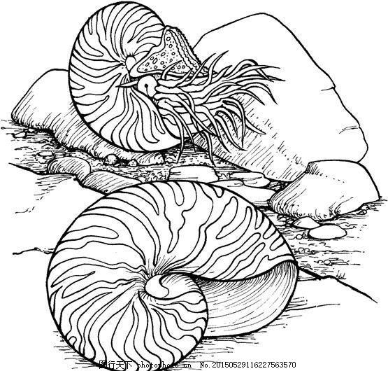 动物素材 海洋动物手绘画 设计素材 动物专辑 素描速写 书画美术