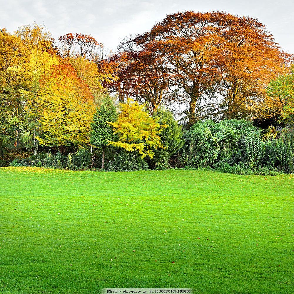 草地与秋天树木风景