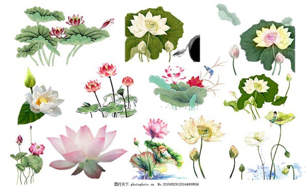 工笔画莲花psd分层素材 手绘花卉 荷花莲蓬 白色