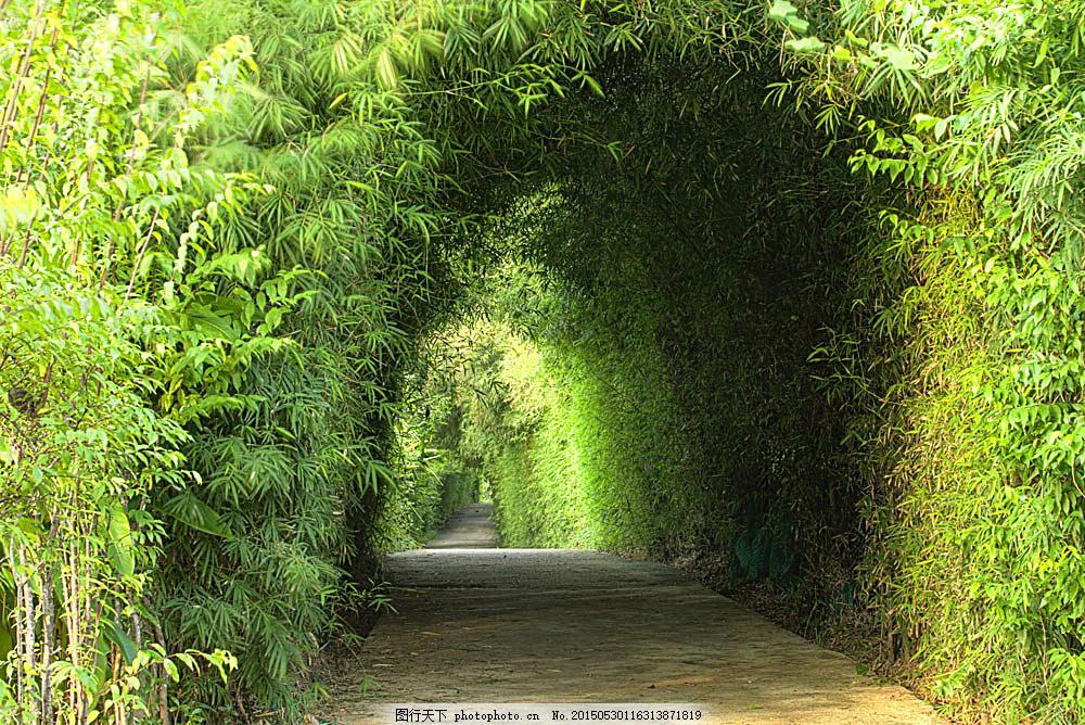 竹林里的马路风景 绿竹 道路风景 竹林风景 竹子 美丽竹林景色
