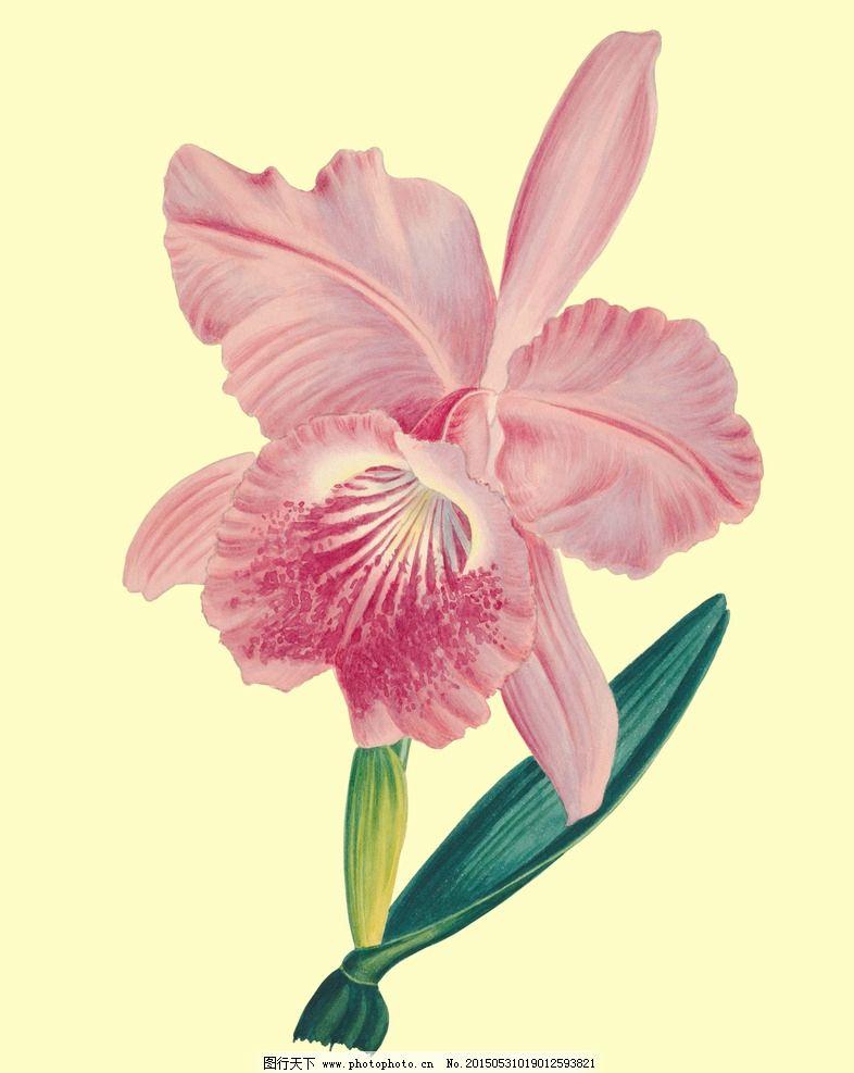 手绘画 植物 兰花 装饰画