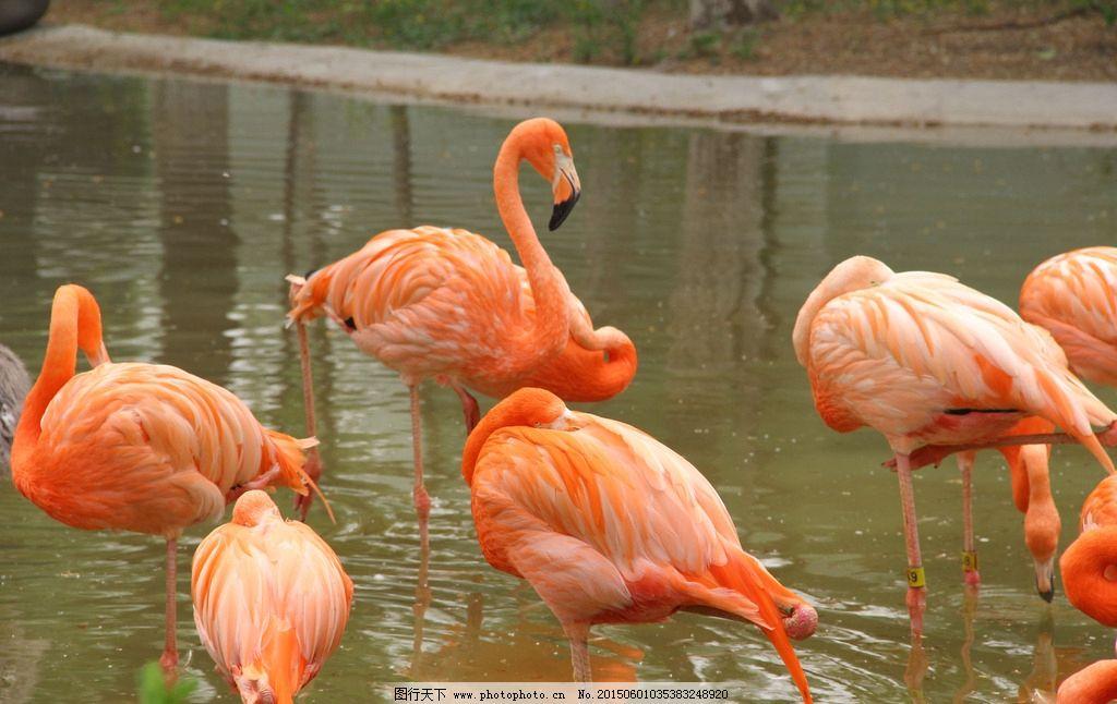动物园 火烈鸟图片
