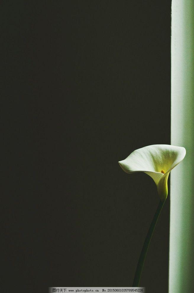 一朵小小的花 小植物 小花 一朵小花 坚强的小花 自然风光 摄影图片