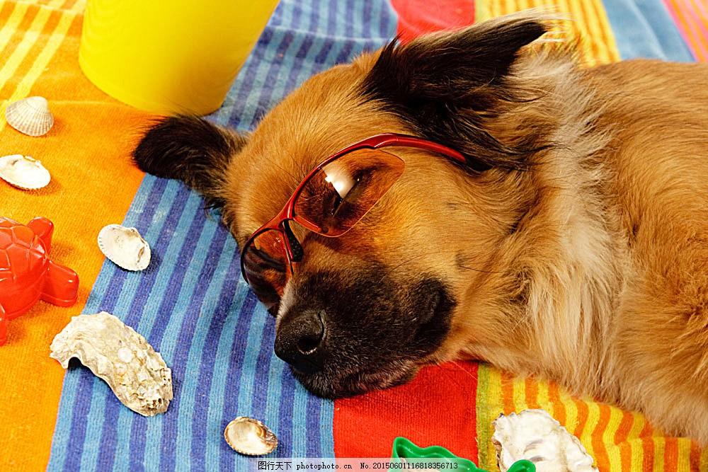 睡觉的小狗 动物 动物世界 摄影图 宠物 名贵犬种 小狗 睡觉 眼镜