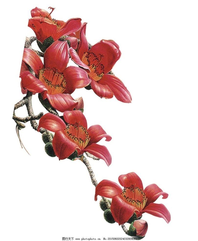 木棉花 红花 木棉 广州 红色 6月 设计 自然景观 自然风光 cdr