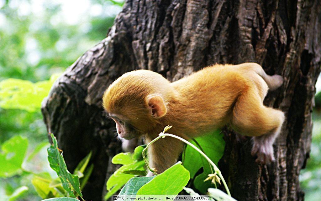 简笔画 动物猴子爬树