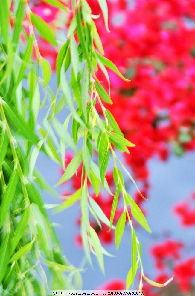 花红柳绿图片_树木树叶_生物世界_图行天下图库