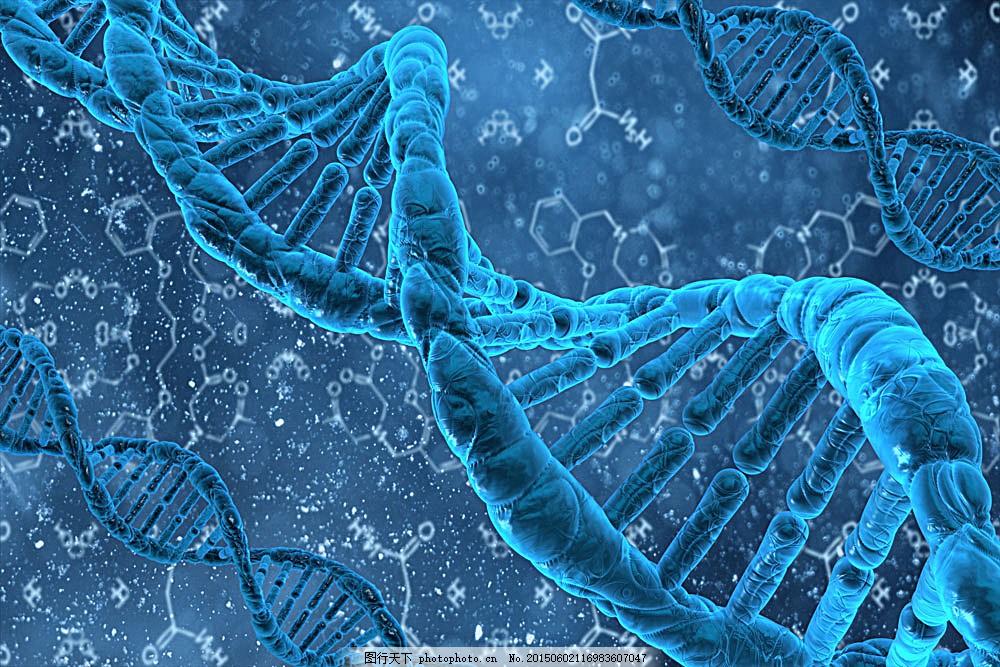 dna结构和分子式