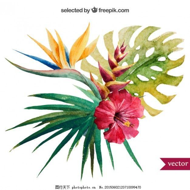 水彩画的热带植物 花 自然 油漆 树叶 水彩花 木槿 手绘 异国情调