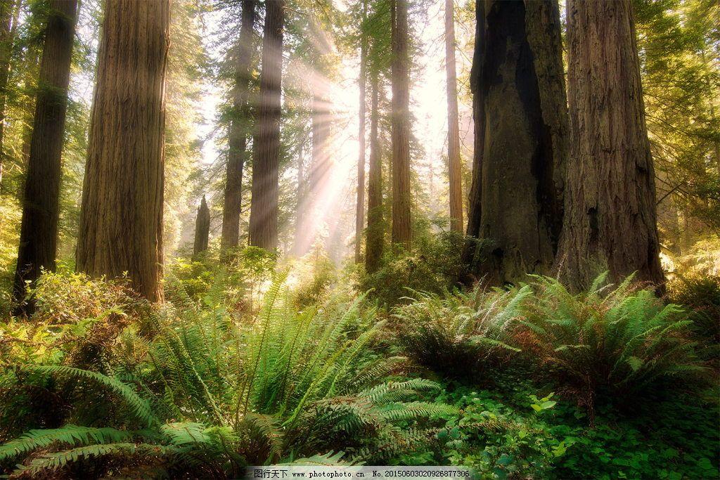 阳光森林背景图片