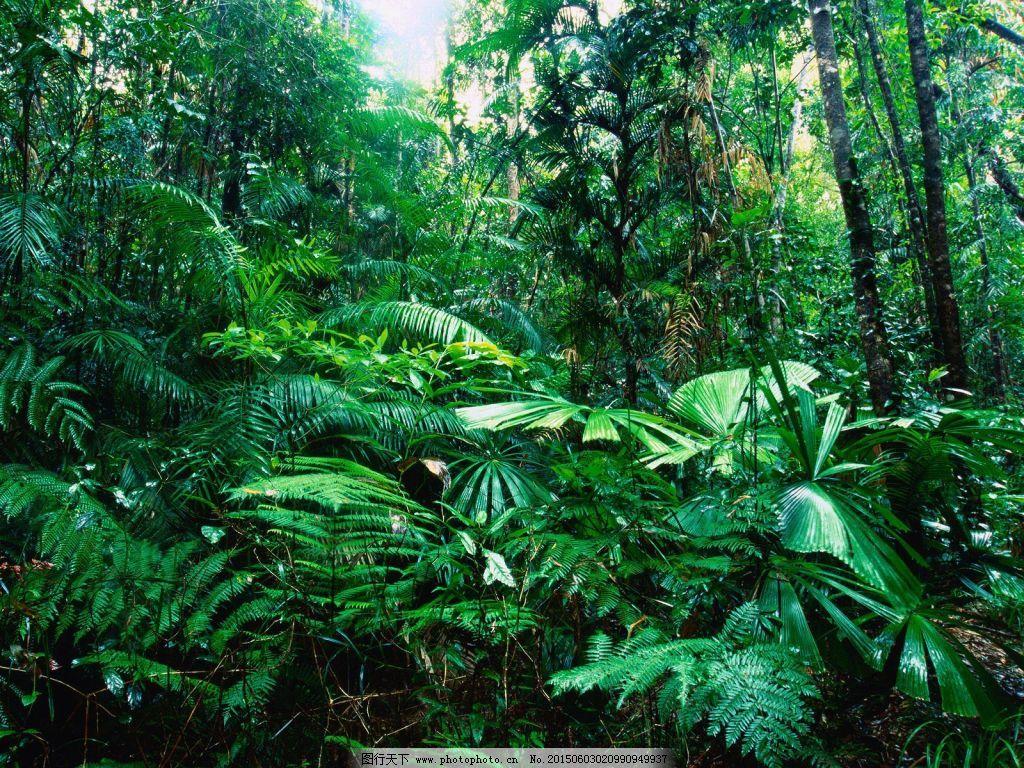 壁纸 风景 森林 桌面 1024_768图片