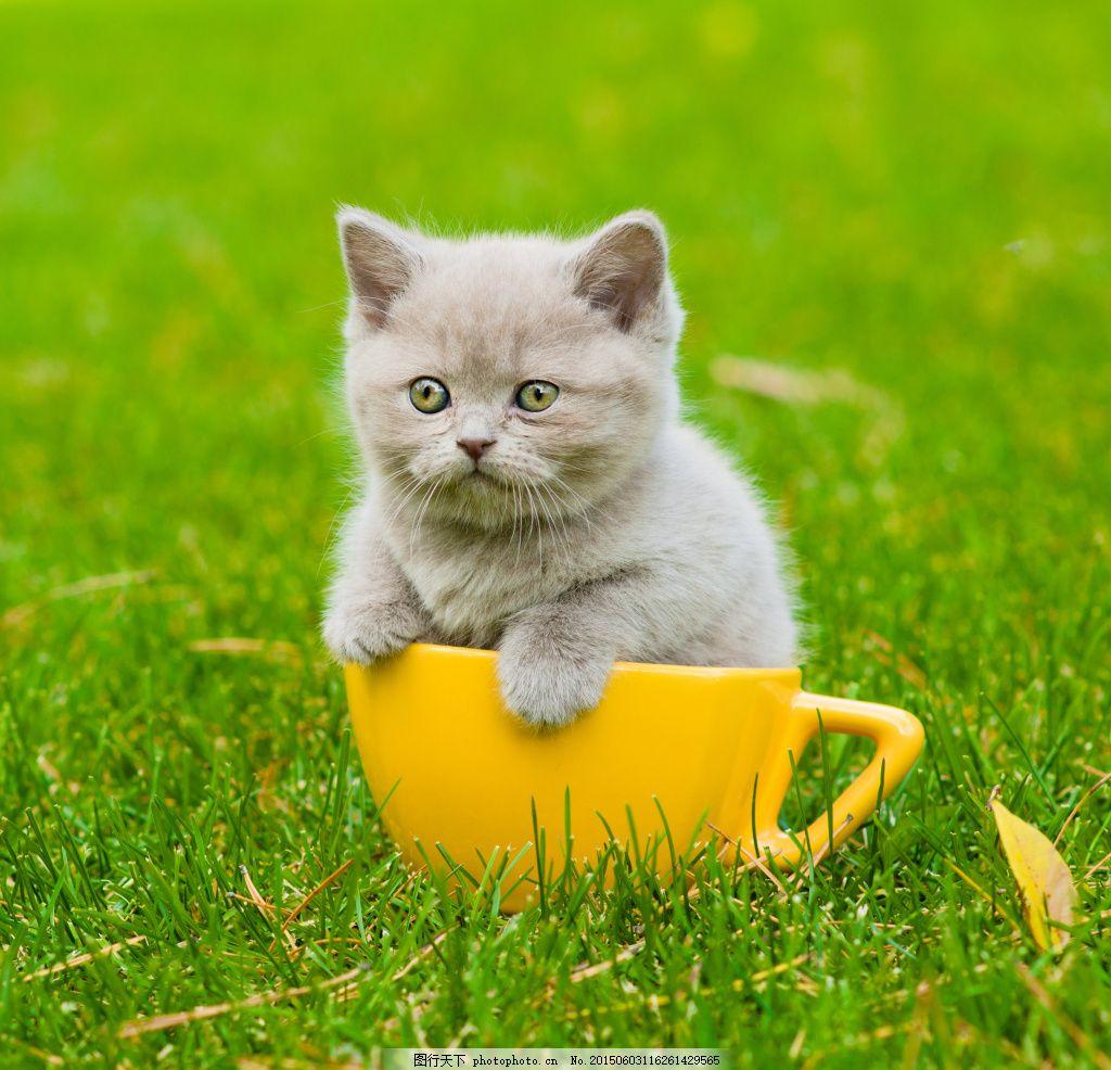可爱的小猫动物高清 小猫写真 可爱猫 宠物猫 猫咪 动物世界 陆地动物
