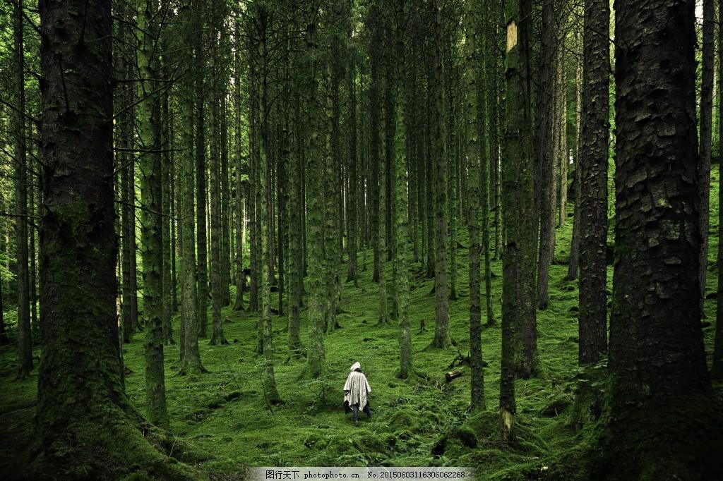 大自然 风景 树 树林 森林 绿林 树木 草 草地 草坪 绿草