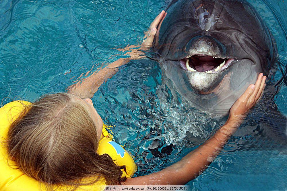 海豚 动物 动物世界 摄影图 野生动物 海底动物 水中生物 生物世界