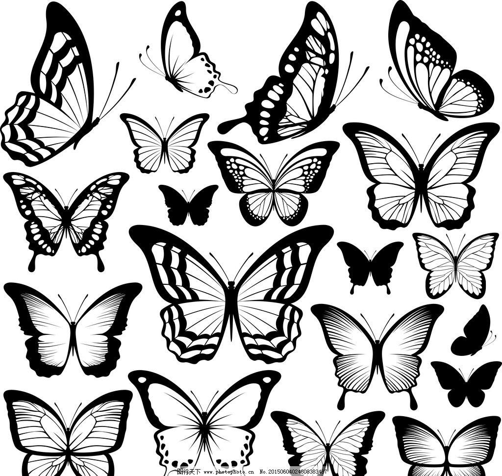 蝴蝶 黑白蝴蝶 手绘 昆虫
