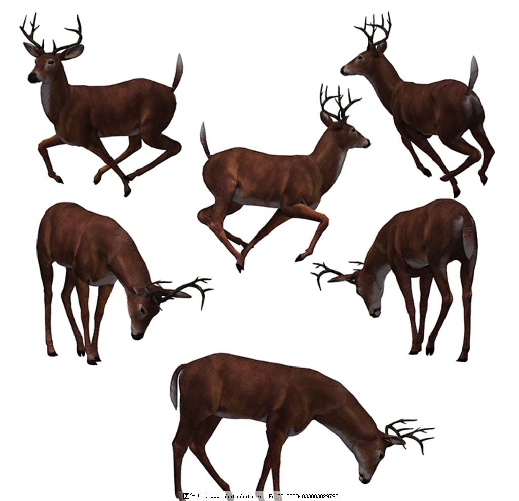 3d鹿 鹿素材 动态 静态 公鹿 奔跑 动物 设计 psd分层素材 其他 300