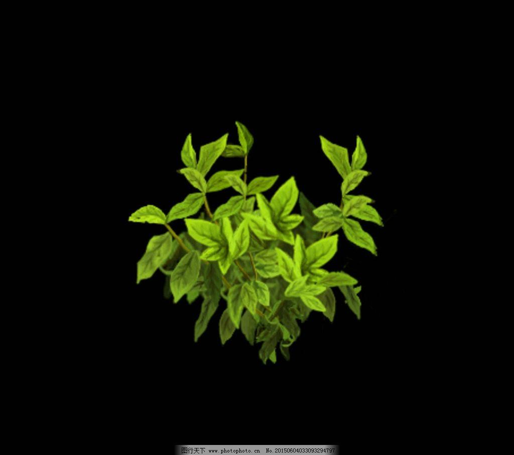 手绘茶叶 植物图片