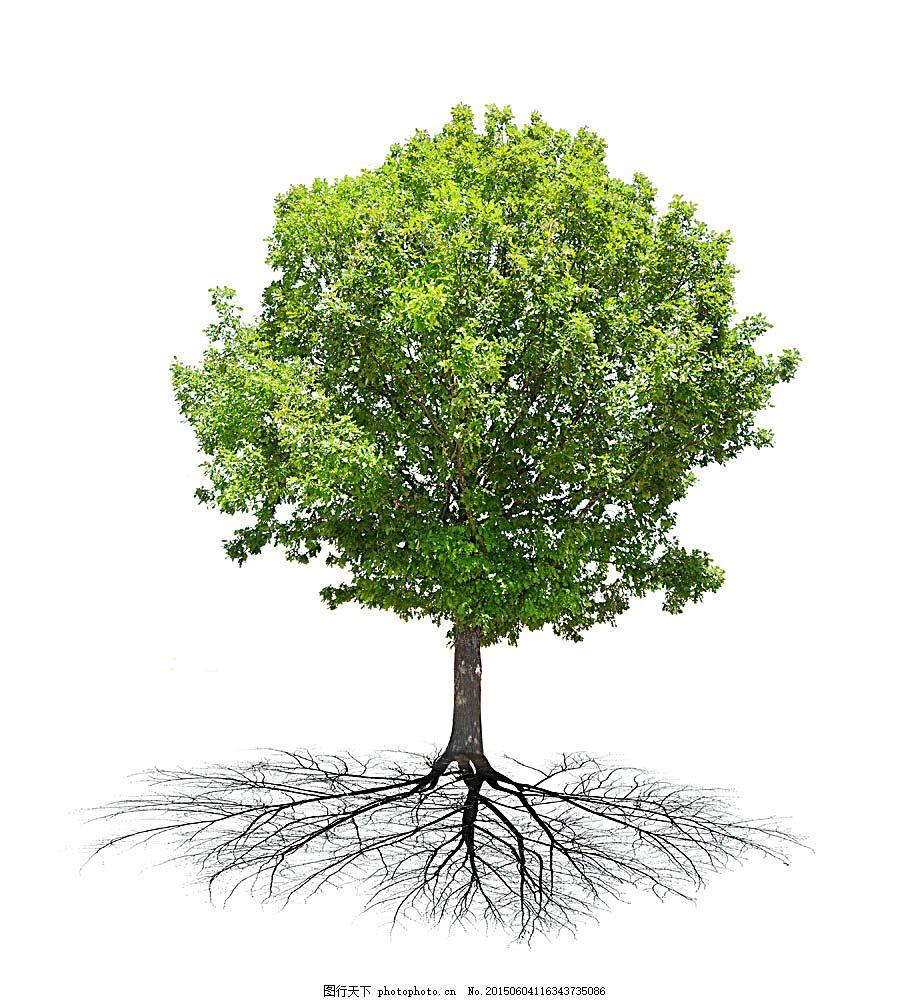 绿色树木的根 叶子 根茎 植物 花草树木 生物世界 图片素材 白色