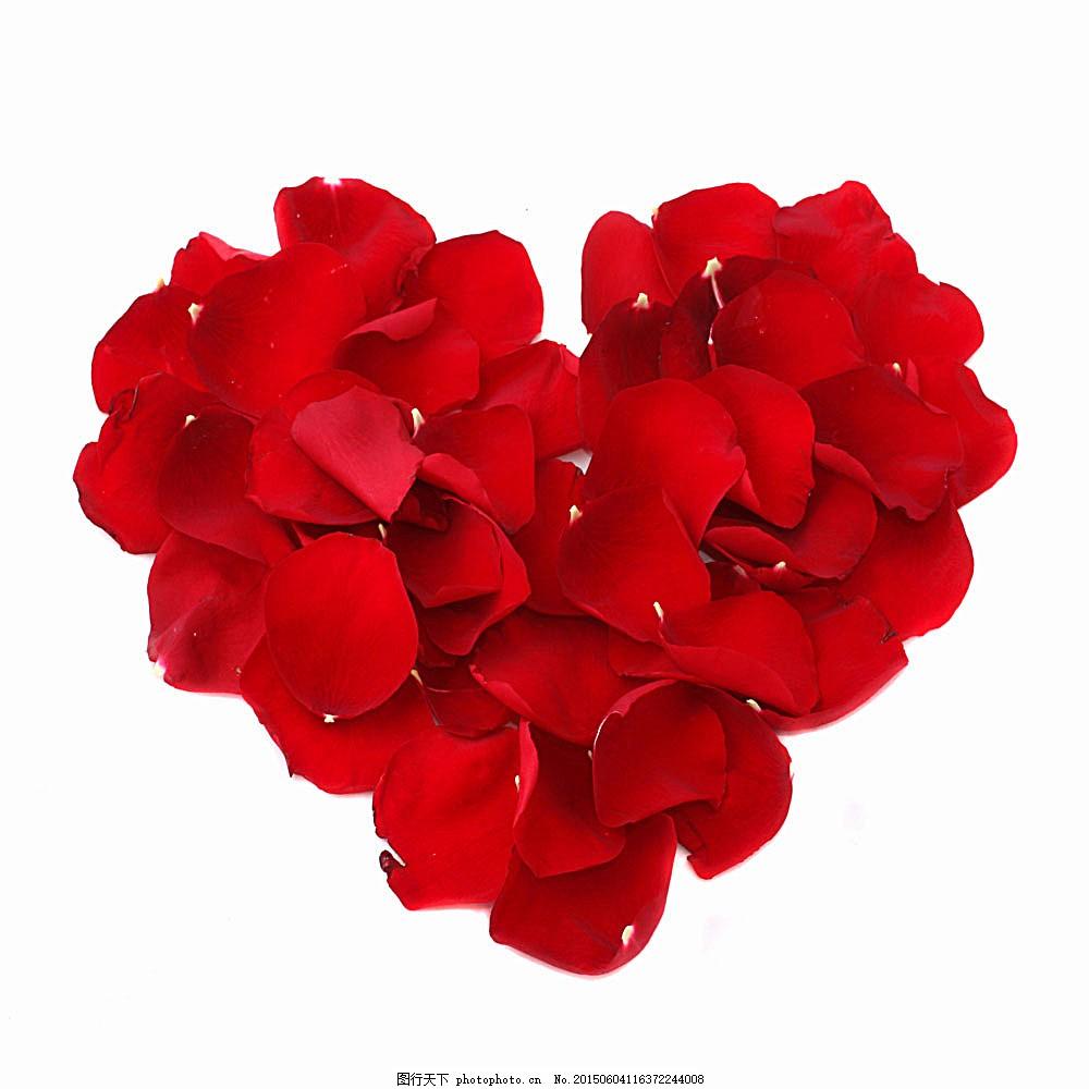 玫瑰花瓣爱心 花朵 鲜花 花卉 植物 花草树木 生物世界 图片素材