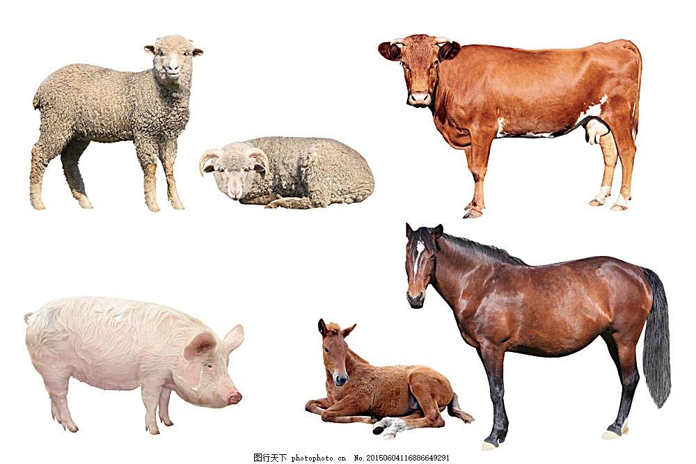 各种家养动物