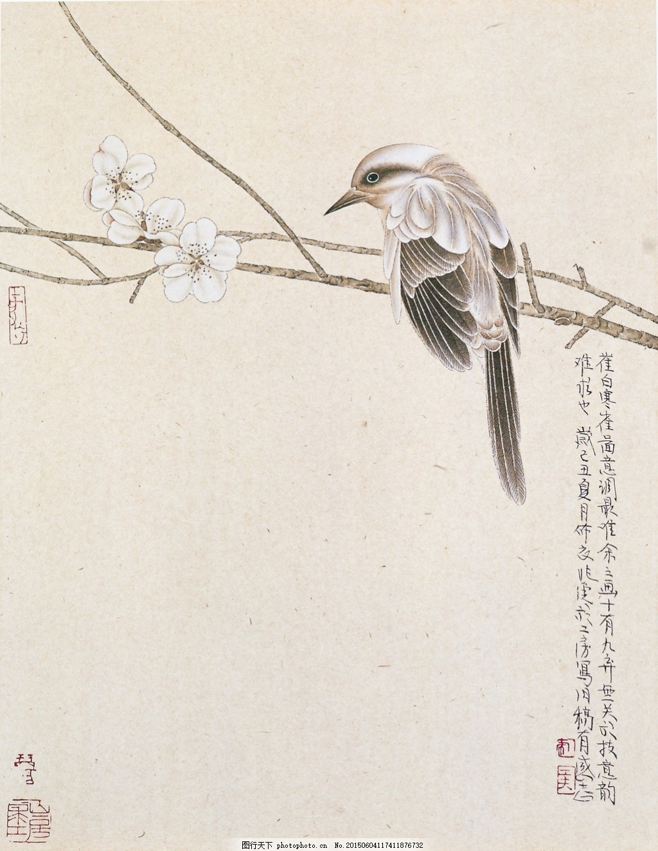 简约国画花鸟篇 工笔 花卉 动物 植物 梅花 树枝 免费下载 中国风
