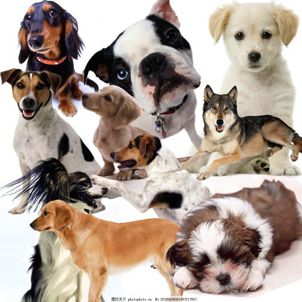 宠物狗狗小动物分层图片大全psd素材