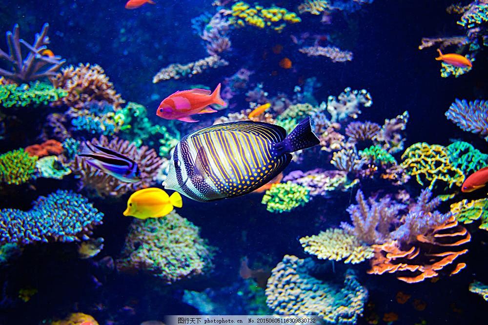 美丽珊瑚和鱼类 鱼 鱼类动物 海鱼 珊瑚 海底世界 海洋生物 海洋海边