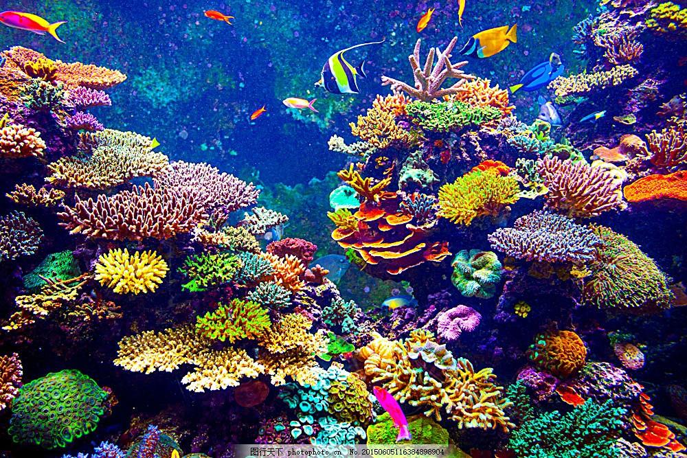 美丽珊瑚和鱼 鱼类动物 海鱼 海底世界 海洋生物 海底风景 海洋海边