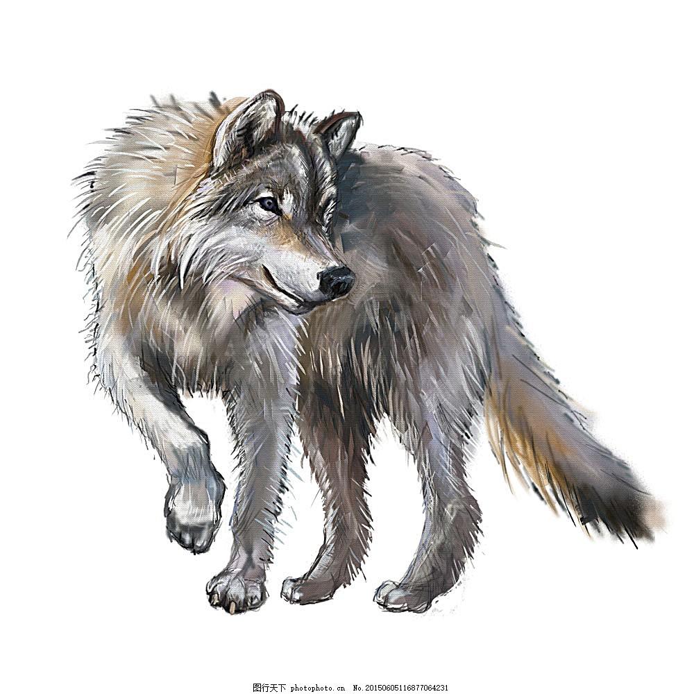 矢量狼插画 动物插画 矢量动物 水彩画 水彩动物 陆地动物 生物世界