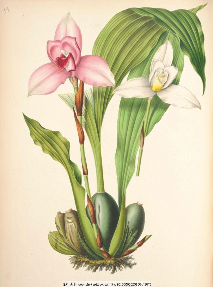花卉 蝴蝶 鲜花 手绘花纹 精美花纹 兰花贴图 简洁 移门设计 彩色花朵