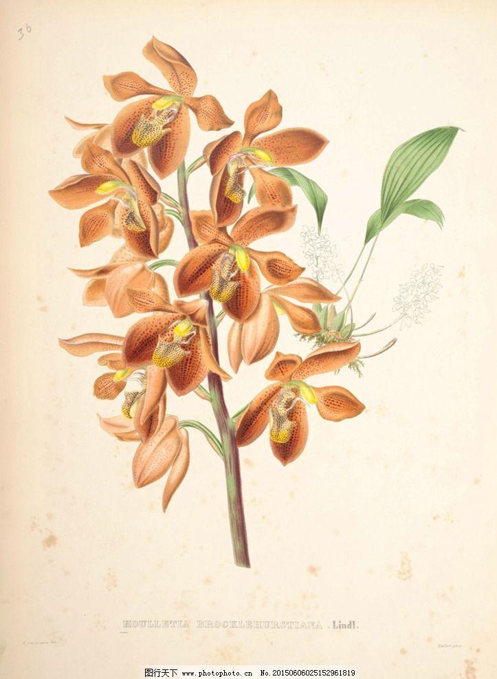 花卉 蝴蝶 鲜花 手绘花纹 精美花纹 兰花贴图 简洁 移门设计 彩色花