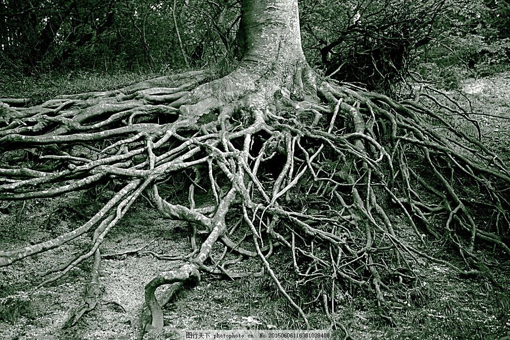 植物根部摄影 大树 树根 美丽风景 美丽景色 美景 其他风光 自然景观