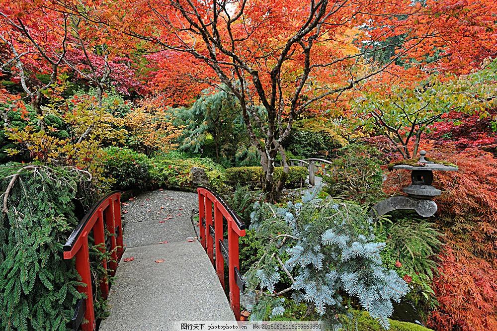 秋天枫树林景色