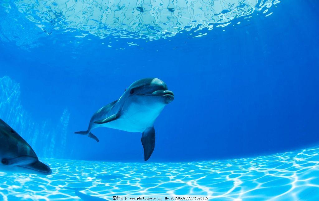 海豚 海洋动物