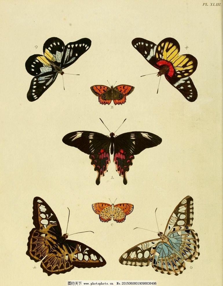 国画怎么画蝴蝶步骤