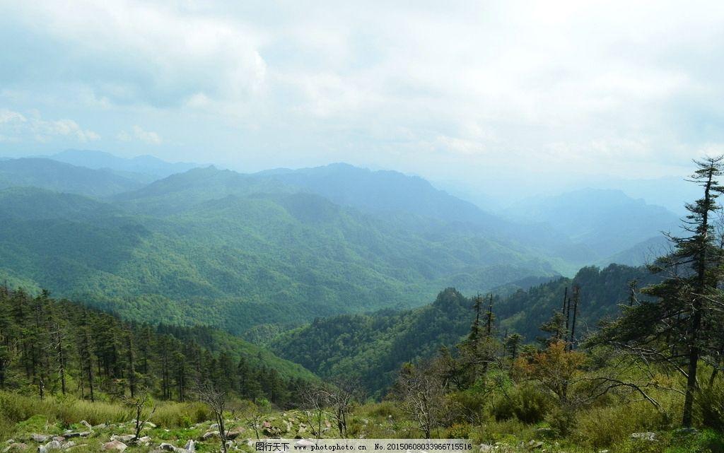 秦岭原始森林图片