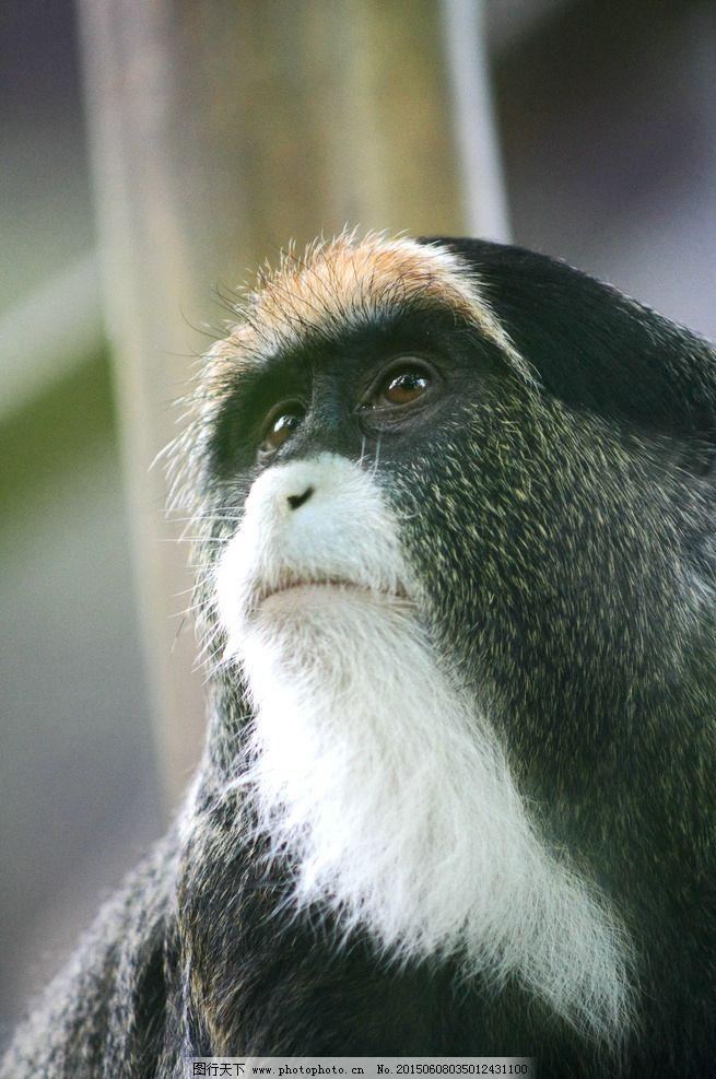 动物 猴子 狒狒 动物园 自然 环境 生物 摄影 生物世界 野生动物 300