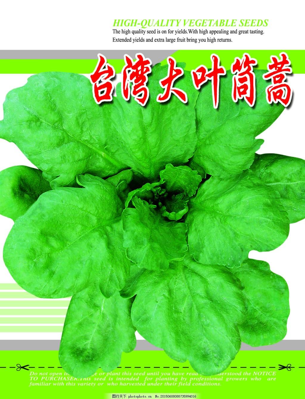 大叶筒蒿 菜种 蔬菜 叶菜类 绿色图片