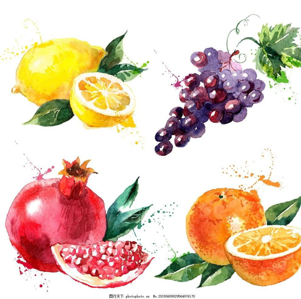 手绘水果 手绘橘子 手绘葡萄 手绘石榴 手绘柠檬 手绘素材 手绘元素