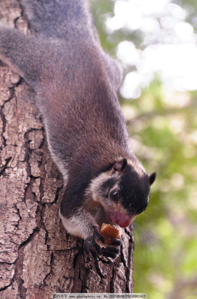 觅食 爬树 环保 保护动物 生态 自然 蝙蝠 飞禽 摄影 生物世界 野生动