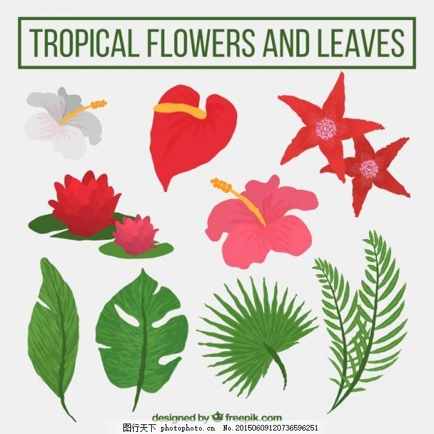 手绘热带花卉和植物